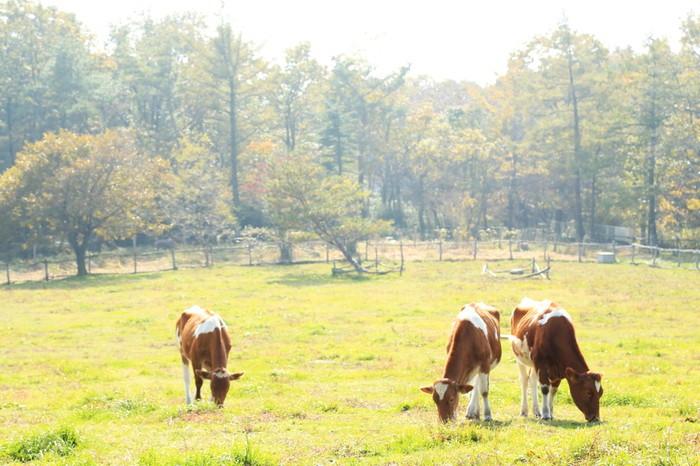 こちらで観光♪のんびりまったり「南ヶ丘牧場」2205759